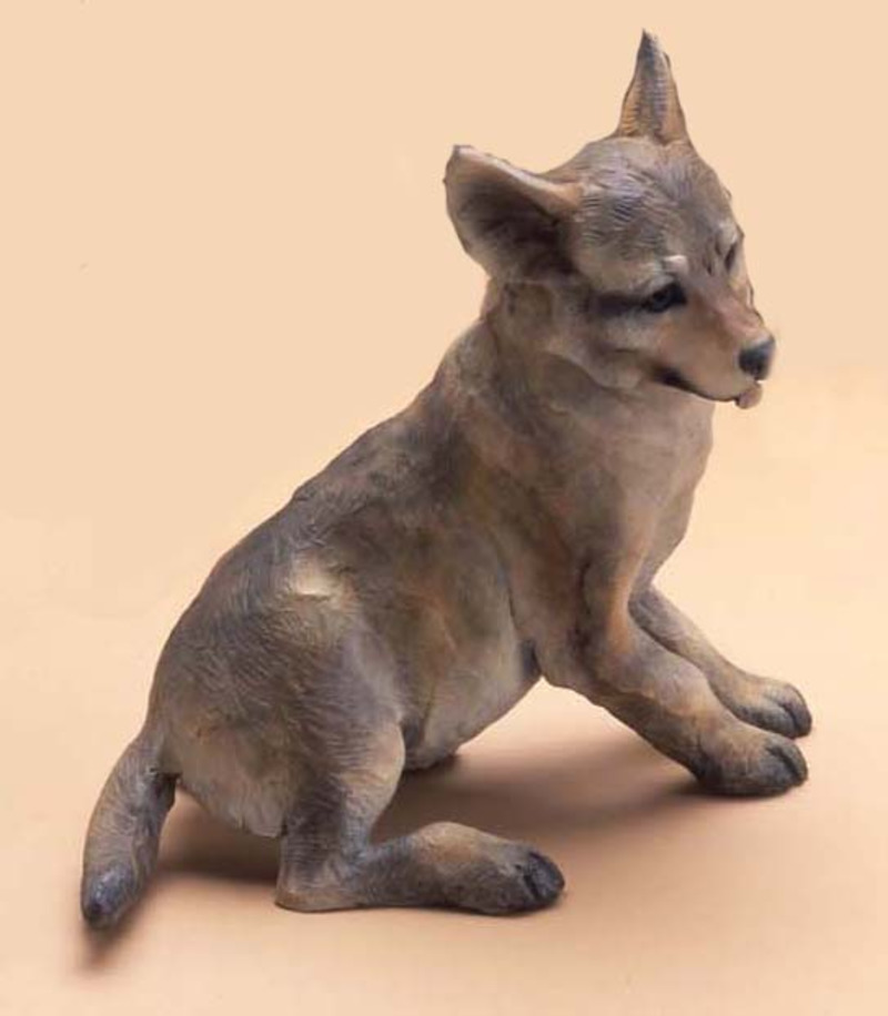 Coyote Pup SD